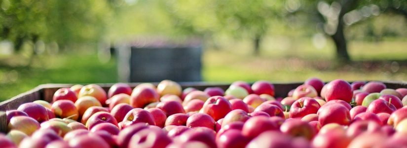 apples loaded in rigid pallet containers